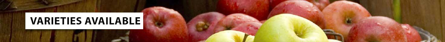 NY and NJ apple varieties at Demarest Farms