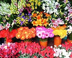 flowers_250