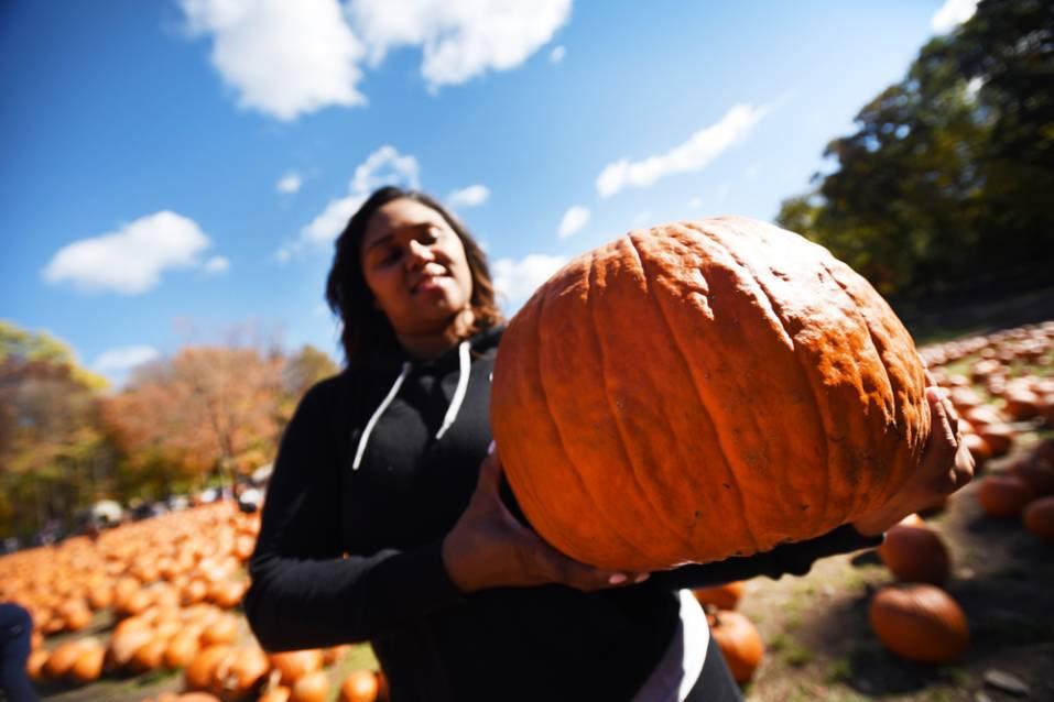 northJersey.com pix of pumpkin patch at Demarest Farms, Hillsdale, NJ