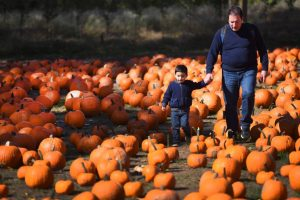 Pick Your Own Pumpkins @ Demarest Farms | Hillsdale | New Jersey | United States