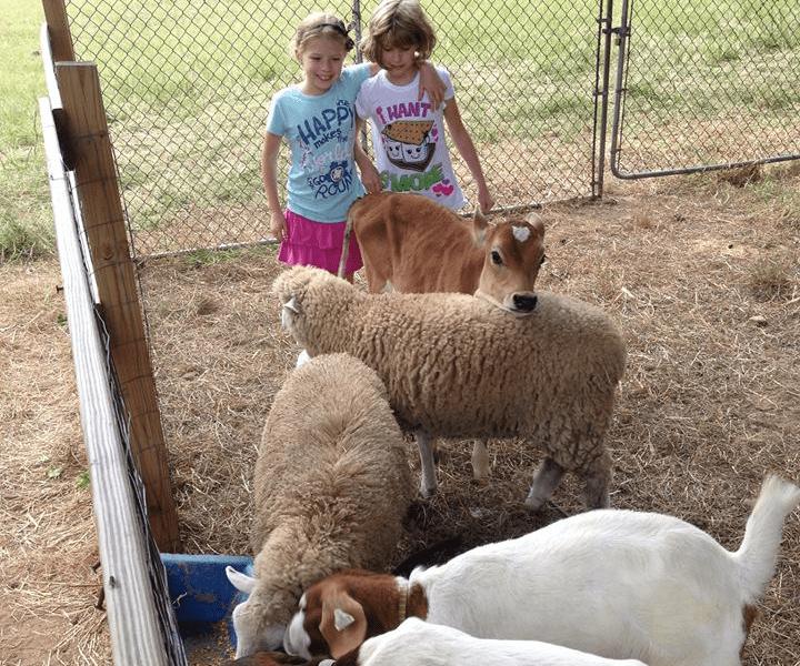 Farm friendly animals at Demarest Farms