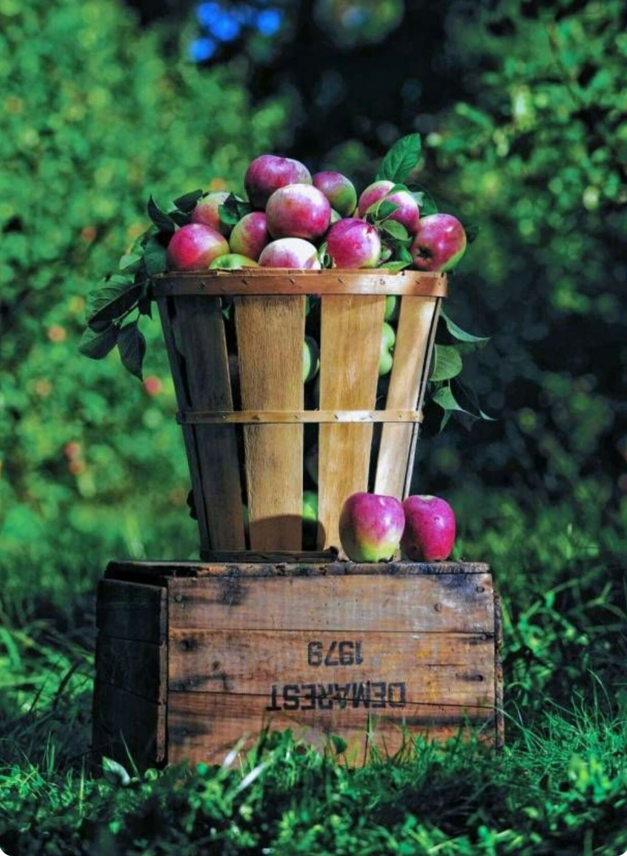 Demarest Farms Named one of the Best Places to Pick Apples in US